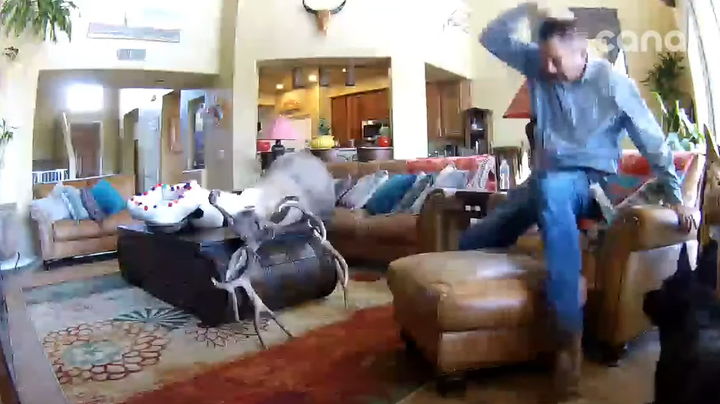 Watch: Mounted Deer Head Falls on Man Relaxing in Chair at Home Preview Image