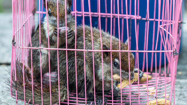 Investigators Find Hundreds of Squirrels, Plus Deer, Nutria, and Other Wildlife in Mobile Home Preview Image