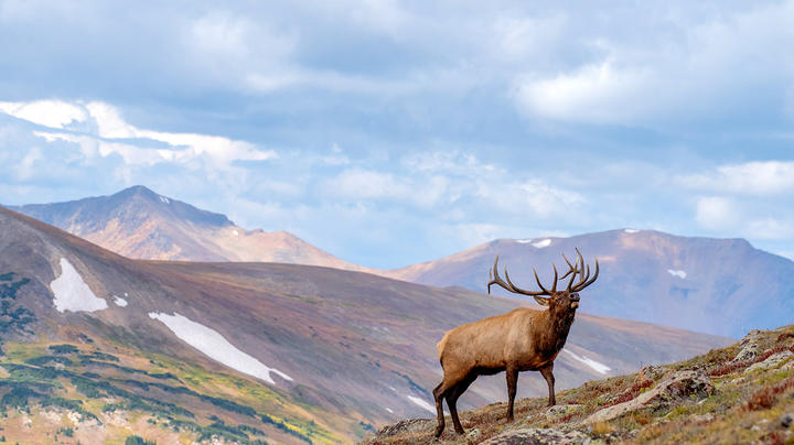 6 Ways to Prepare for an Elk Hunt Preview Image