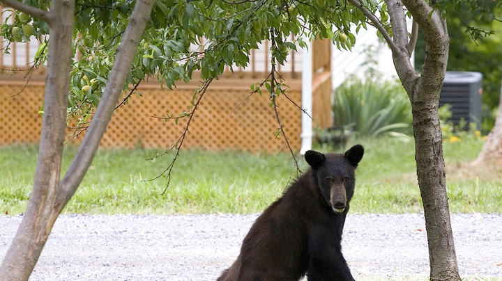 Colorado Man Attacked by Black Bear in Garage Preview Image