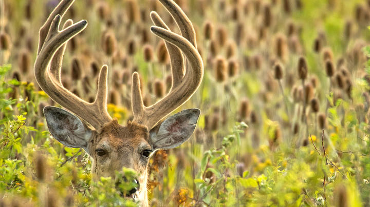 Answered: 5 Early Season Deer Hunting Questions Preview Image