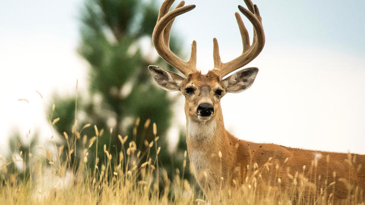 10 Things You Didn't Know About Velvet Bucks Preview Image