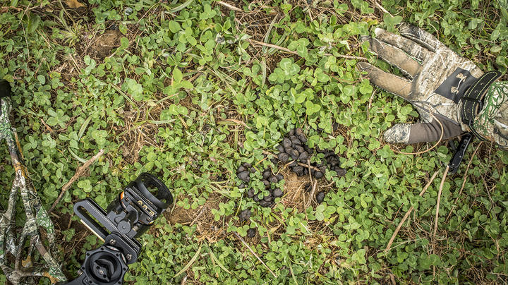 Micro Food Plots for Bow Season Preview Image