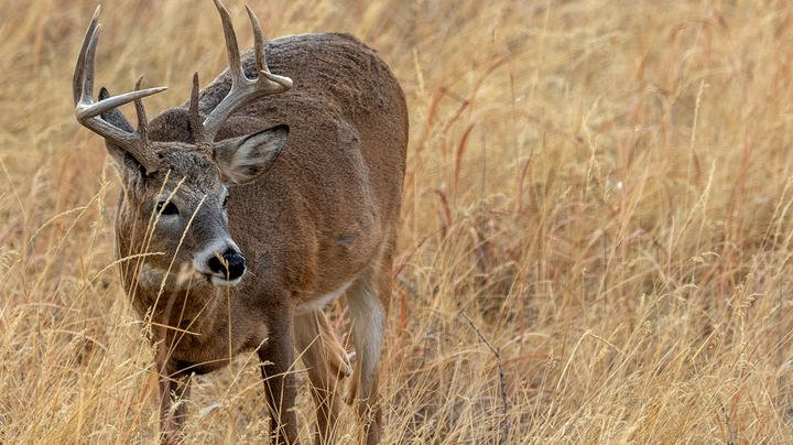 Anti-Hunter Hysterics, Deer Disease Updates, 53-Year Mystery Solved, and Other Deer Hunting News Preview Image