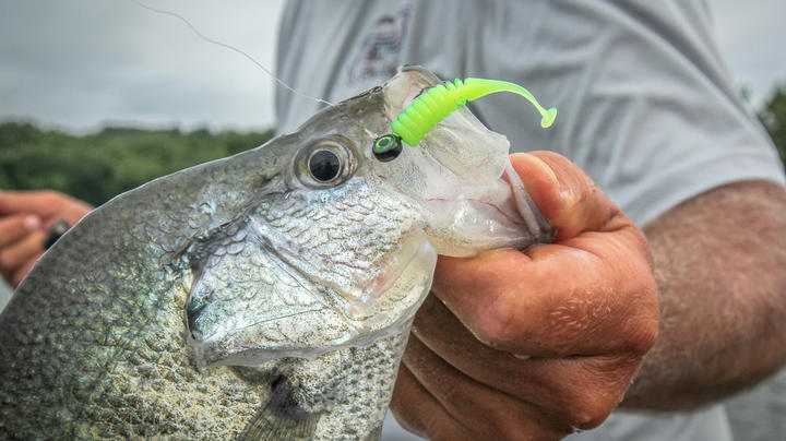 Best Lures for Crappie Fishing: Jigs vs. Minnows Preview Image