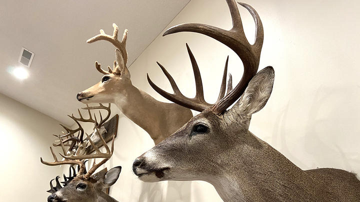 How Long Should Deer Taxidermy Take? Preview Image