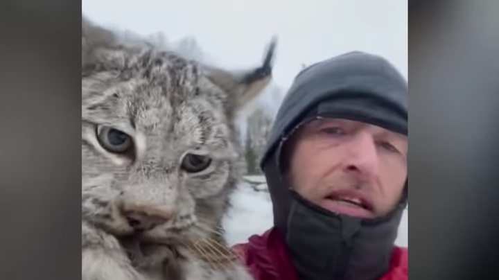 B.C. Farmer Grabs Lynx by Scruff of Neck, Lectures It for Killing Chickens Preview Image