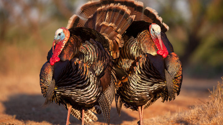 Turkey Hunting Nation Southwest Update Preview Image