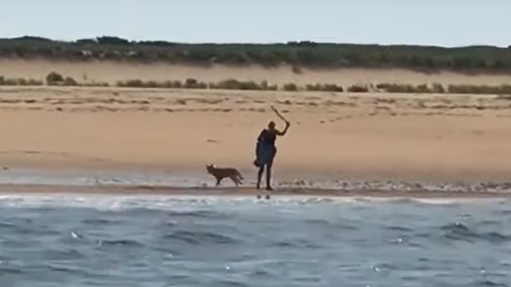 Watch: Fishermen Save Woman From Aggressive Coyote on Cape Cod Beach Preview Image