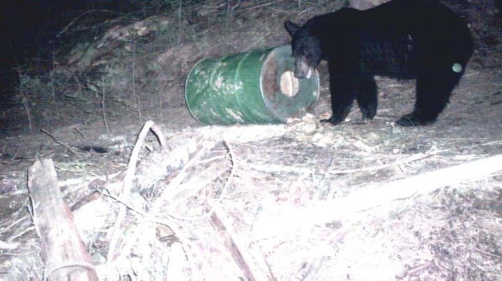 The Hot-Button Topic of Bear Baiting Preview Image