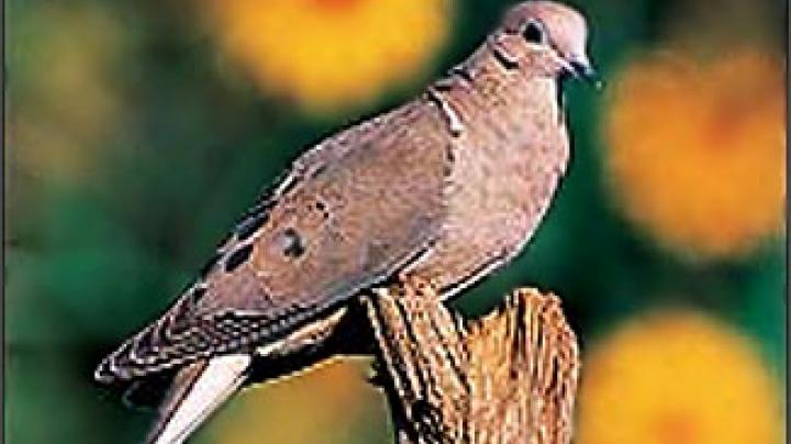 GA Dove Cranks On September 4 Preview Image