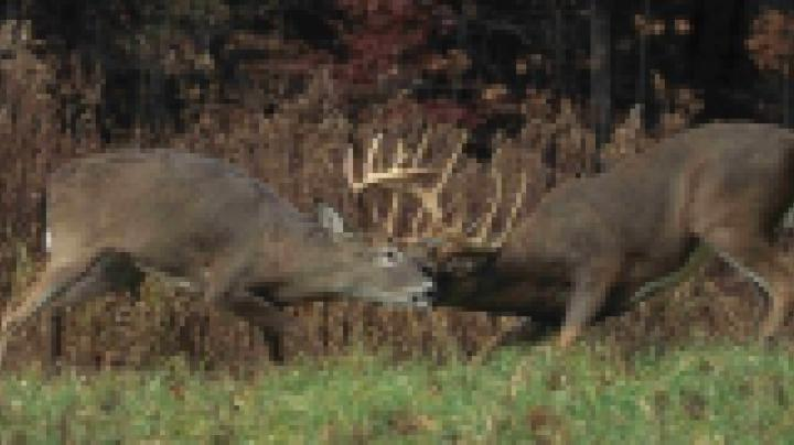 The Realtree.com Deer Hunter's Quiz Preview Image
