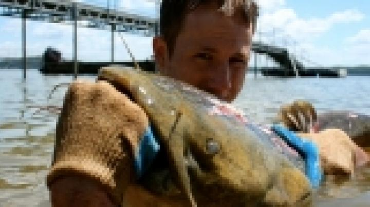 Summertime Catfish Noodling Preview Image