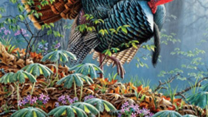 The Wild Turkey in Alabama Preview Image