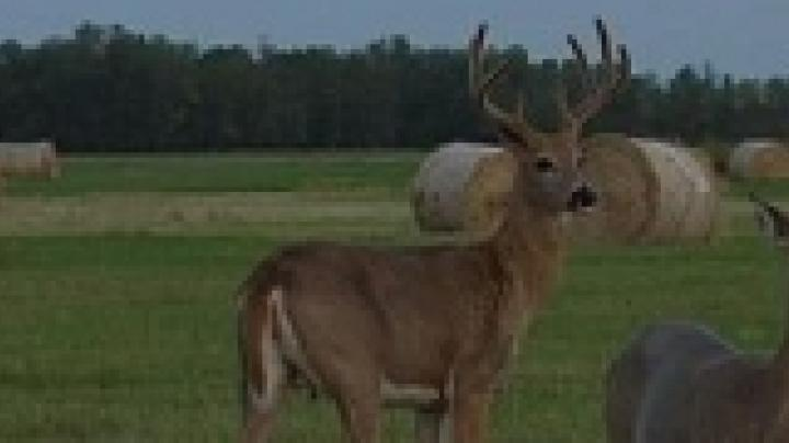 Pete Alfano arrows a ND whitetail Preview Image