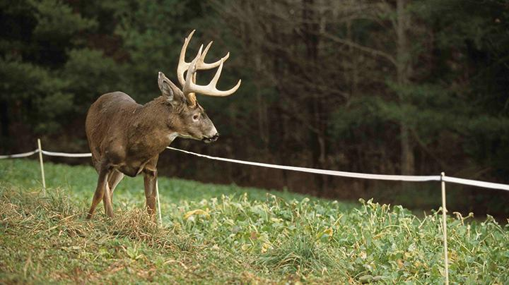 How to Protect Food Plots from Overbrowsing Preview Image
