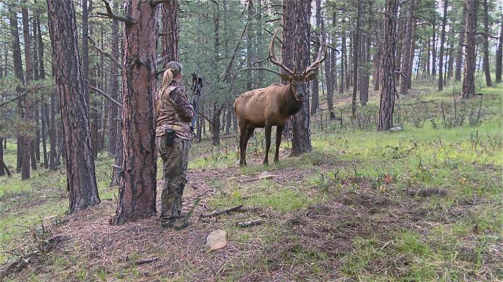 15-Yard Files: Female Bowhunter Stares Down Giant Bull Elk at 4 Steps Preview Image