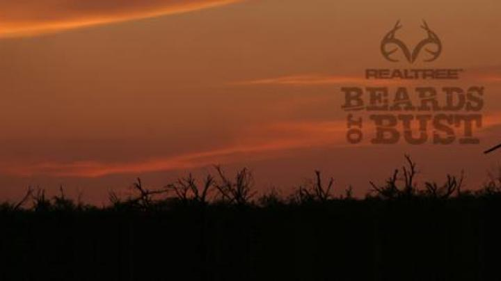 Beards or Bust Video: More South Dakota Turkey Hunting Preview Image