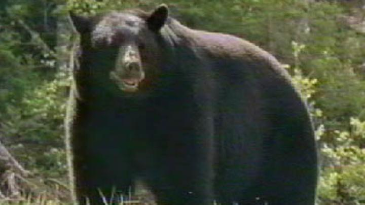 Black Bear Lottery Open in MD Preview Image