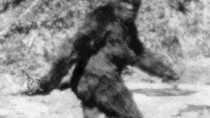 Anyone Up for a Little Texas Bigfoot Hunting? Preview Image
