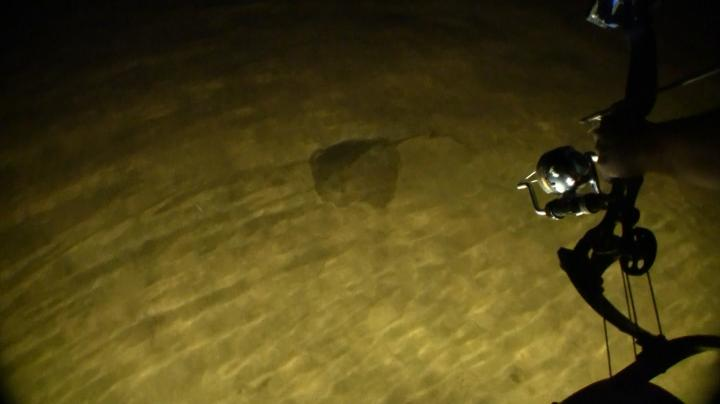 Bowfishing Show: Straight-Up Rays Preview Image