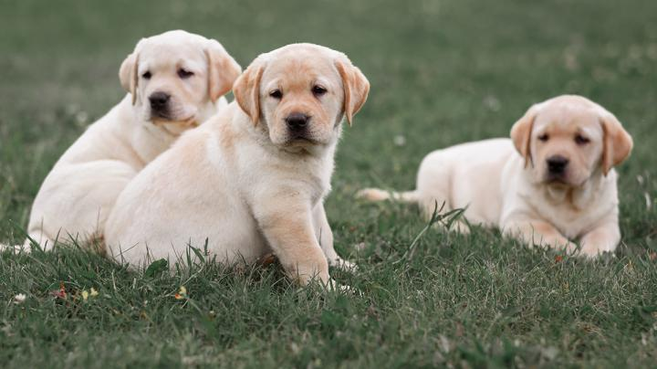 Picking Your Puppy: Traits to Look for in Your Next Hunting Dog Preview Image