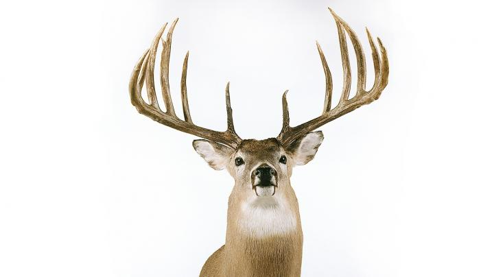 Analyzing the World Record Typical Hanson Buck Preview Image