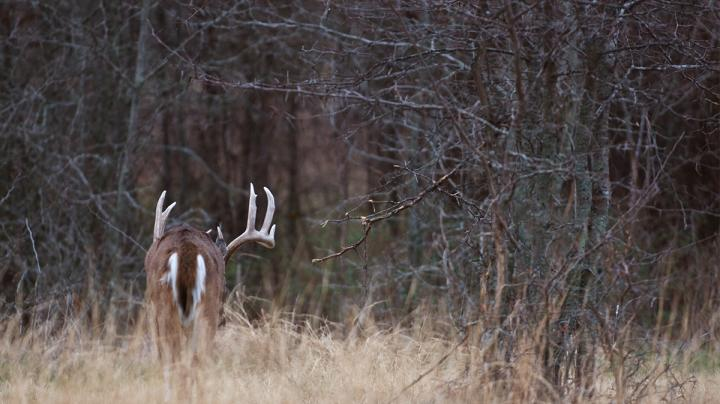 Where the Biggest Booner Bucks Are Coming from Now Preview Image