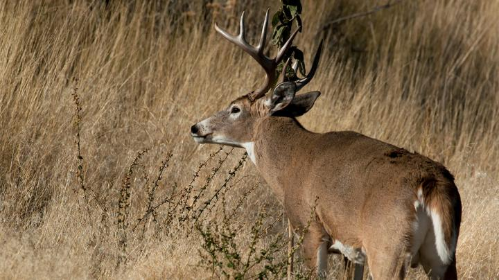 How to Conduct In-Season Scouting Without Pressuring Deer Preview Image