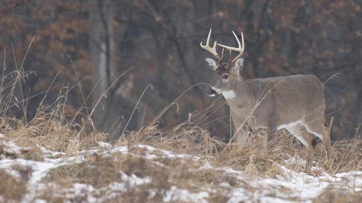 Earn-a-Buck: Was it the Greatest Deer Management Tool? Preview Image