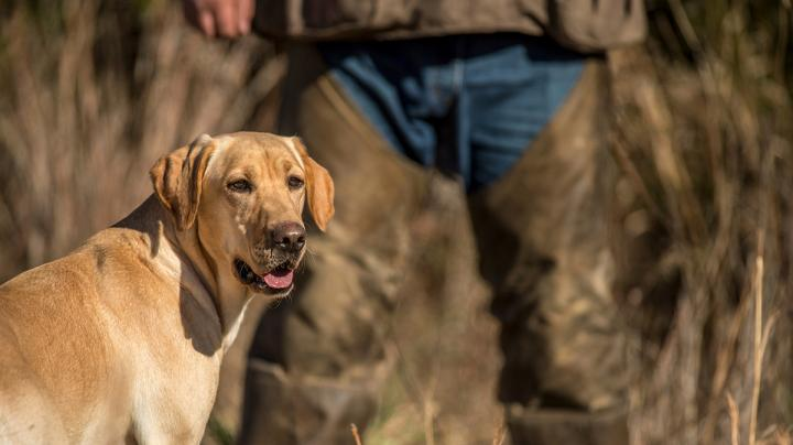 Duck Dog Training: Avoiding 'Little' Bad Habits Preview Image