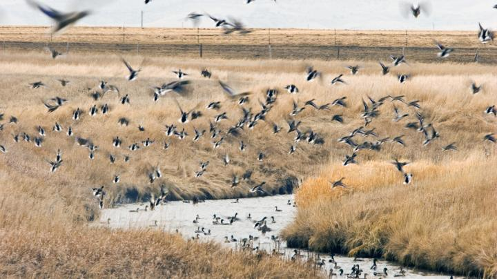 Waterfowling's Promised Land: A Prairie Primer Preview Image