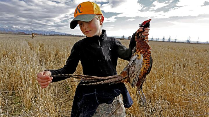 Top 5 States for Pheasant Hunting Preview Image
