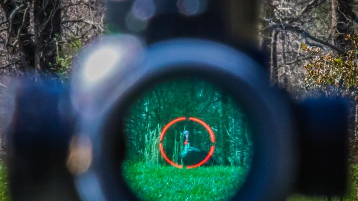 Tungsten Super Shot (TSS) for Turkey Hunting Preview Image