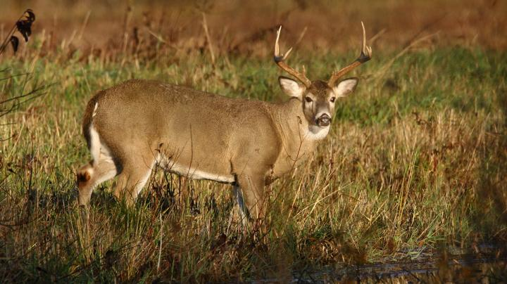 5 Overlooked Public Land Deer Hunting Hotspots Preview Image
