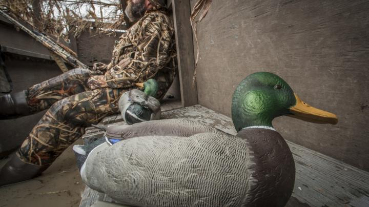The ABCs of Duck and Goose Decoys Preview Image