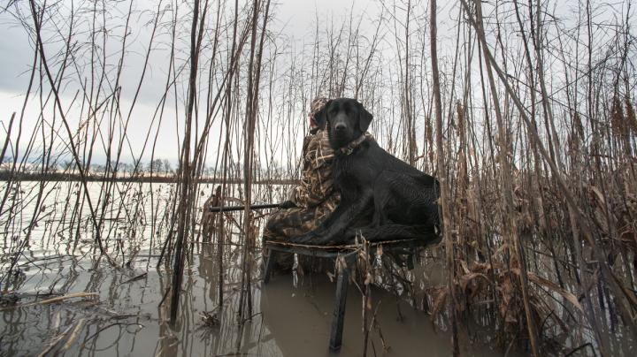 10 Waterfowling Items You Don't Need But Shouldn't Be Without Preview Image