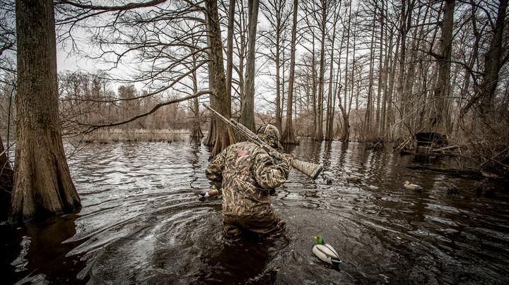 Green-Timber Greenheads: The Duck Hunting Zenith Preview Image