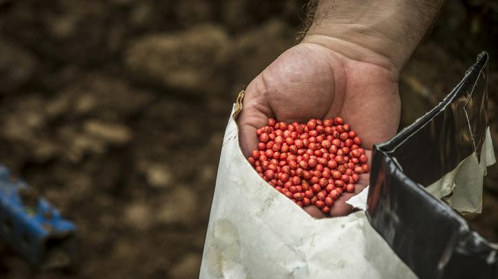 5 Steps to a Successful Food Plot Preview Image