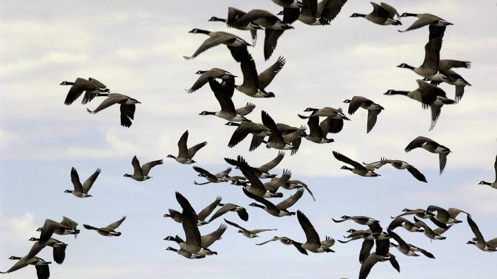 Atlantic Flyway Sees Wet But Productive Start Preview Image