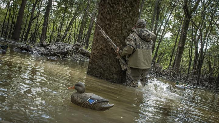 Waterfowling Perfection: Green Timber and Greenheads Preview Image