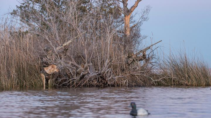Pacific Flyway Action Slows, but Better Days Ahead Preview Image