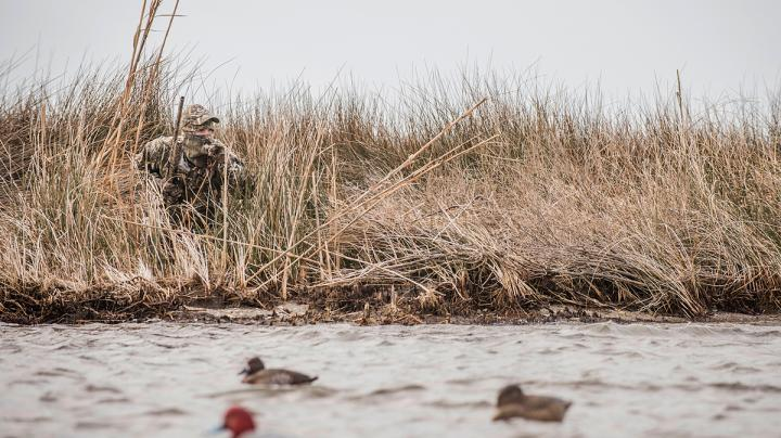 Land-Bound Ducks: Hunting Divers From Shore Preview Image