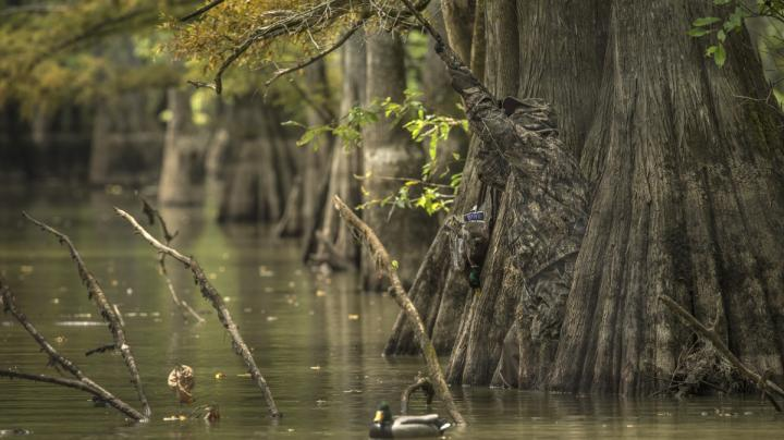Wet Mississippi Flyway Sees Great Start Preview Image