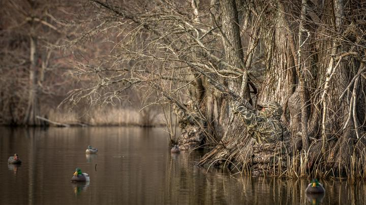 A Dandy Duck Hunting Dilemma: Timber or Impoundments? Preview Image