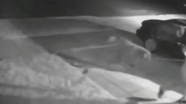 Coyotes Chase Man and His Dog Preview Image