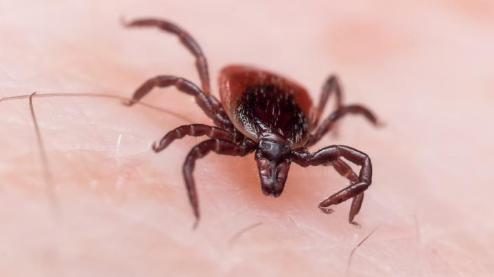 Turkey Hunters: What You Should Know About Lyme Disease Preview Image