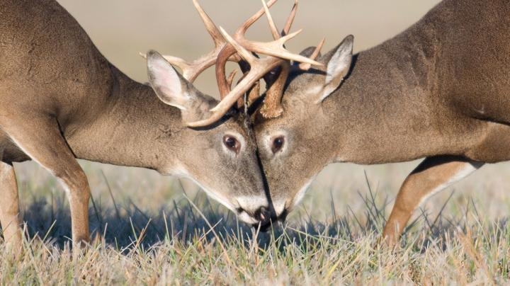 Learning Individual Bucks' Behaviors for Consistent Success Preview Image