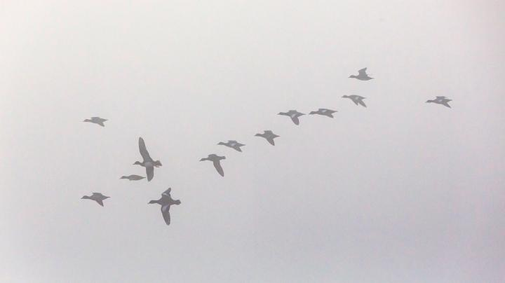 Hunting Ducks and Geese in the Fog Preview Image
