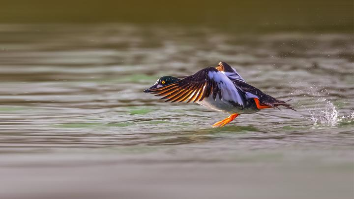 Cold Front Brings Renewed Hope to Mississippi Flyway Hunters Preview Image